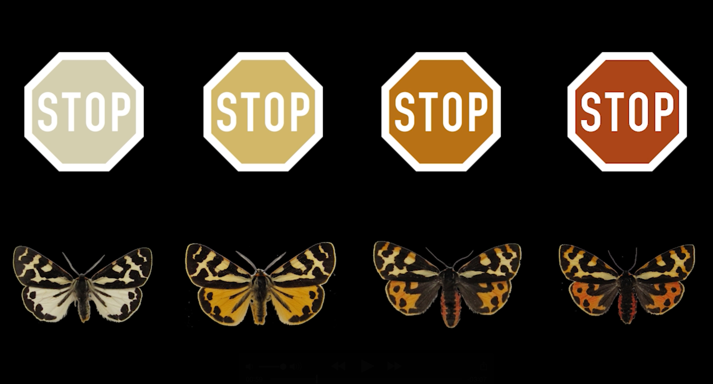 WTM-STOP